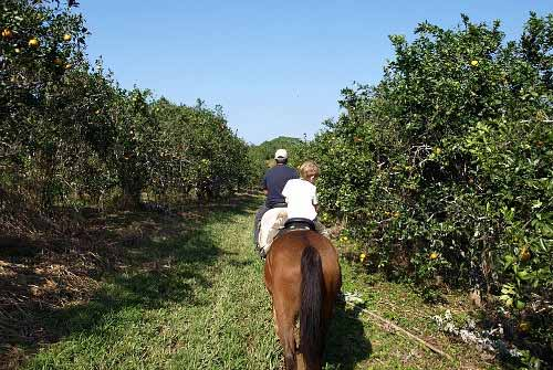 Horseback ride in belize