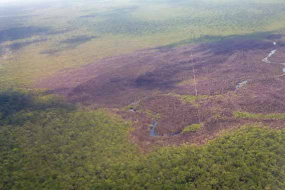 Aerial view of the burned bog in Sarstoon Temash National Park. Prior to burning the bog would have appeared florescent green due to the sphanum moss. Photo by: SATIIM.