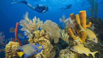 Researchers have found that only 10% of the Belize Barrier Reef wildlife has been discovered!
