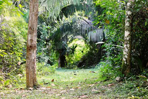 Jungle pictures from Belize nature hike - Christy Brinnehl