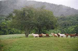 herd of horses in field