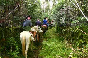Horseback Riding in Belize