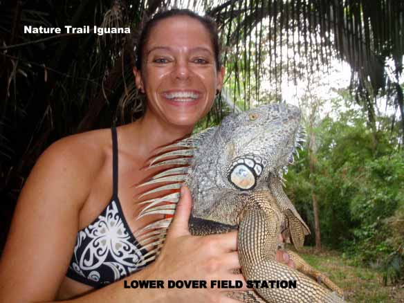 Iguana seen hiking on jungle trails at Lower Dover Jungle Lodge
