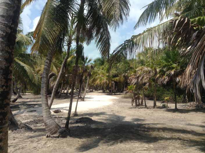 The landscape on Blackadore Caye.