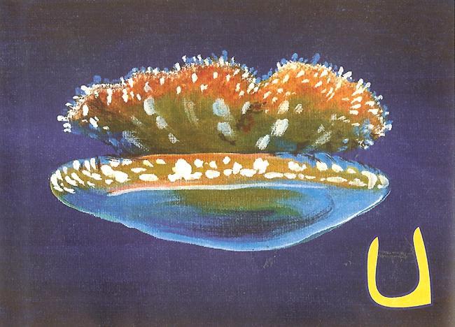 Upsidedown Jellyfish