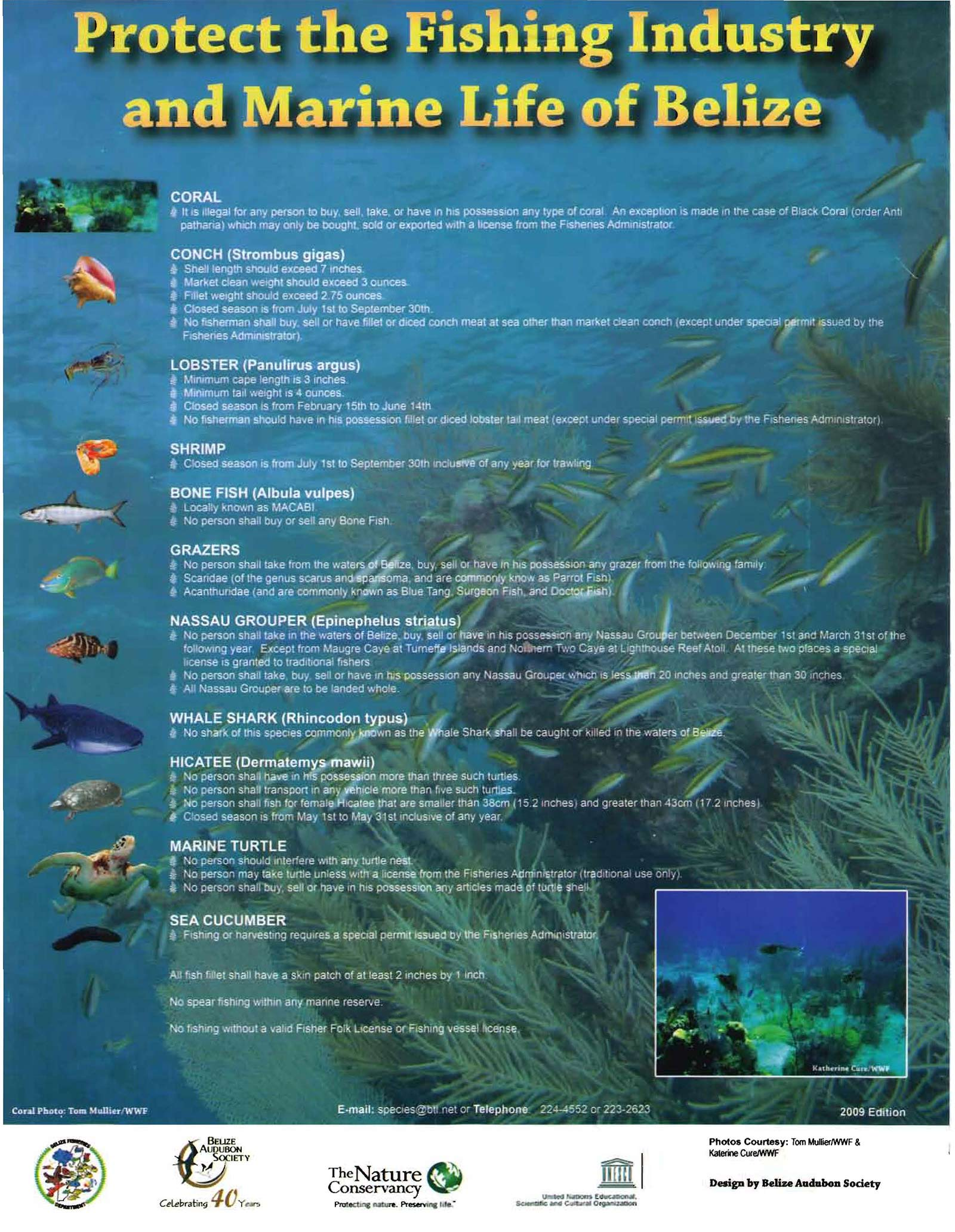 Fishing regulations the belize forums for Fishing license requirements