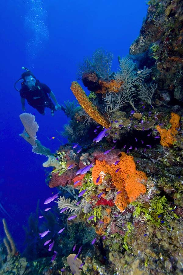 Colorful scuba diving scene