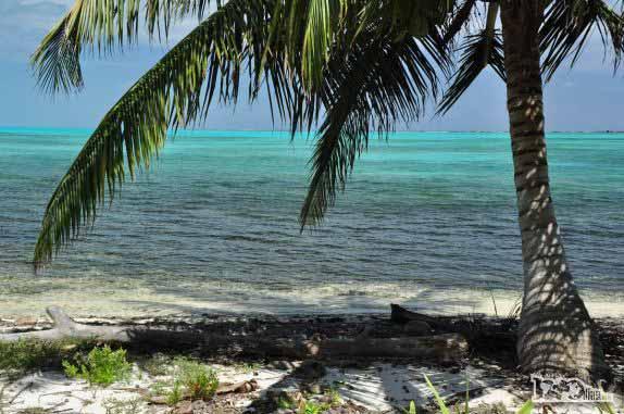 Half Moon Caye, perto do Blue Hole, na grande barreira de corais, em Belize
