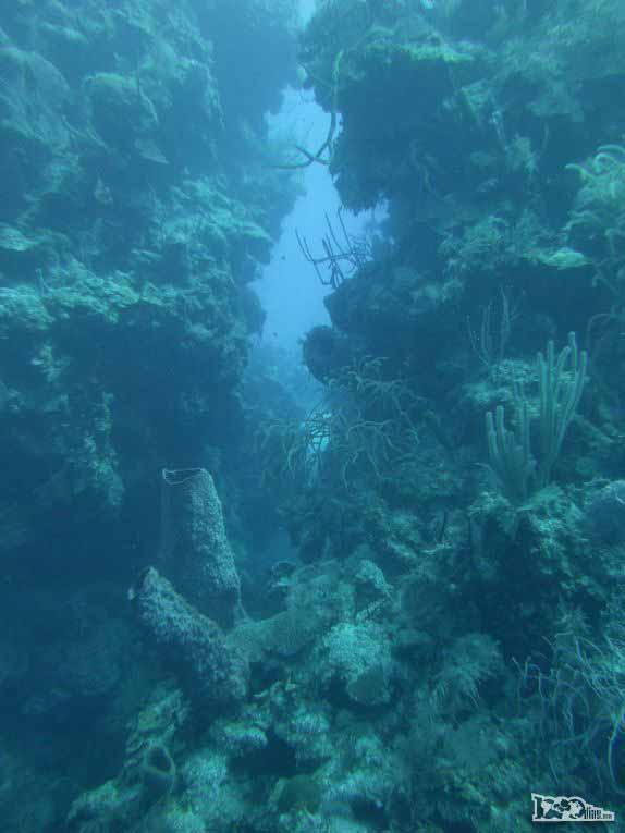 Mergulhando nas paredes de corais de Half Moon Wall, perto do Blue Hole, na grande barreira de corais de Belize
