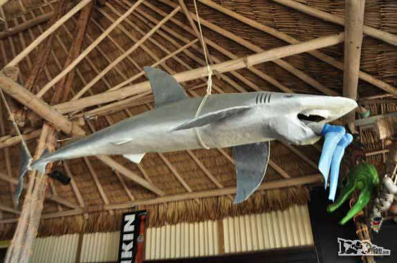 Tubar�o devora mergulhador na decora��o de restaurante em San Pedro, na grande barreira de corais, em Belize