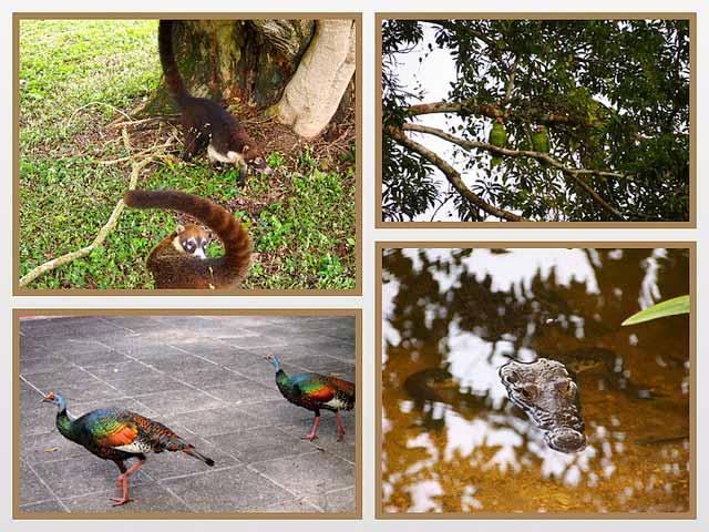 Tikal animals