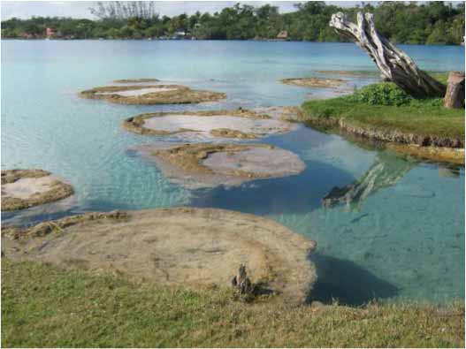 Stromatolites inside the lagoon