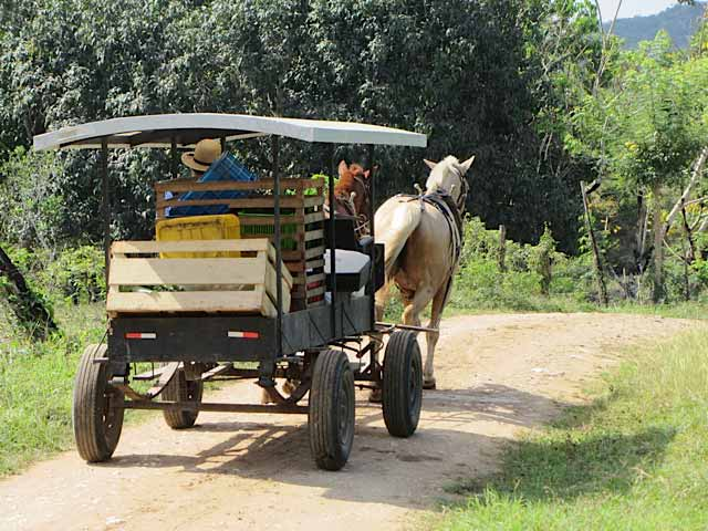 This is the form of transporation of the Mennonites
