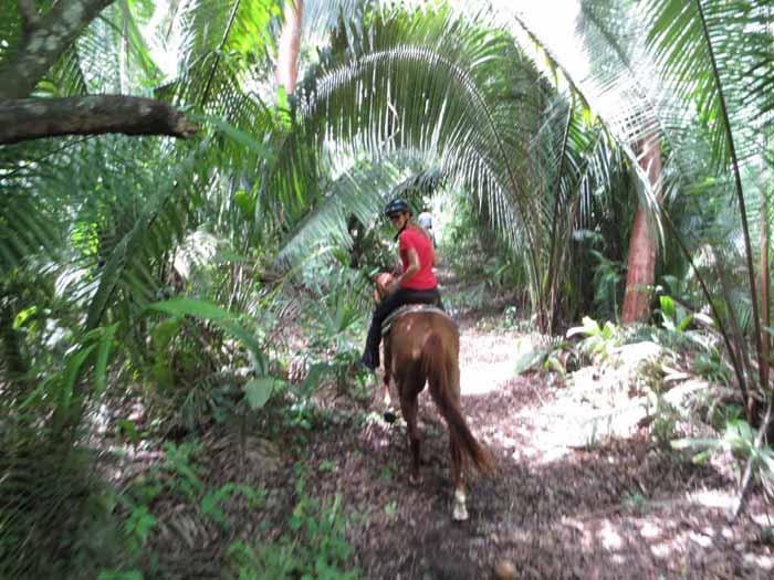 hannah horse belize 3