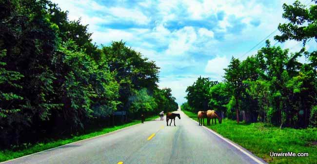 Belize - Guatemala Border (10)