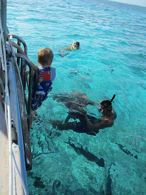 Stepping down into the water to pet a Stingray