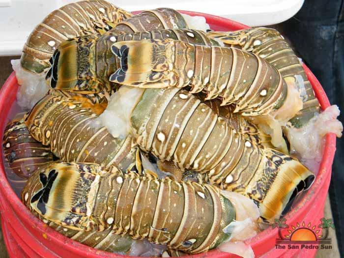 Lobster Season 2012 Opens 11