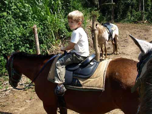 Horses in Belize