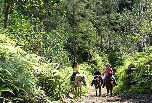 Jungle Horseback Riding