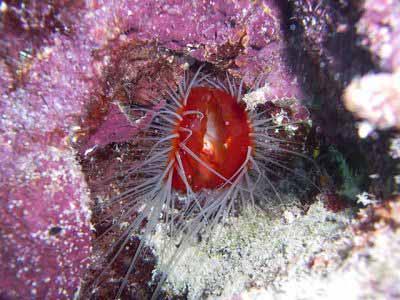 Belize image 2 photo courtesy of Ecologic Divers