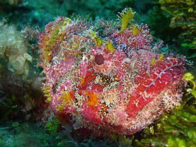 Belize image 3 photo courtesy of Ecologic Divers
