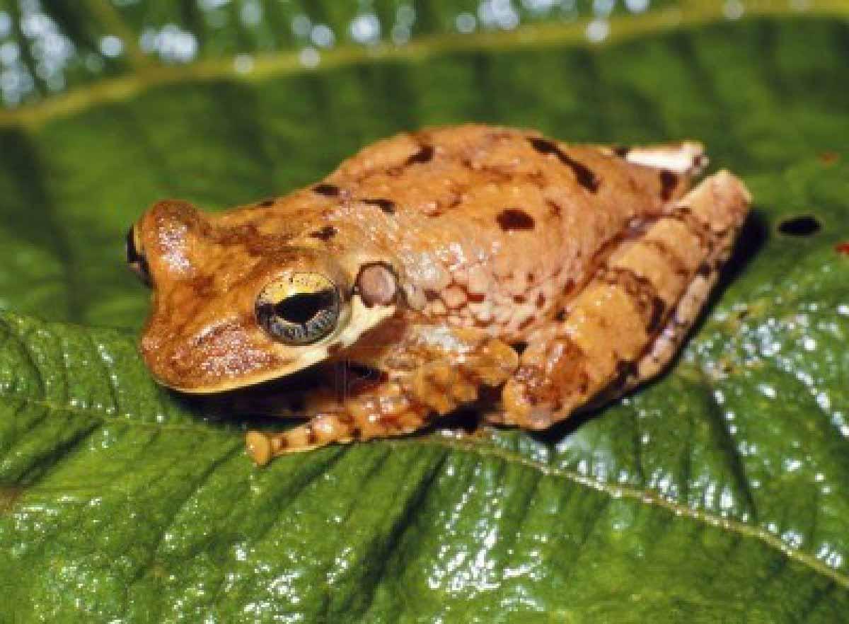 Caribbean Animals: The Most Endangered Species In Belize, Belize Animals