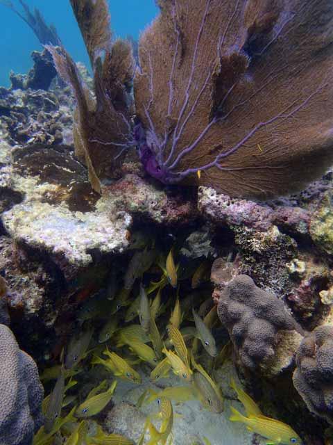 belize-fish-webb