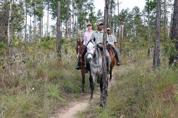 horseback riding mountain pine ridge forest reserve belize