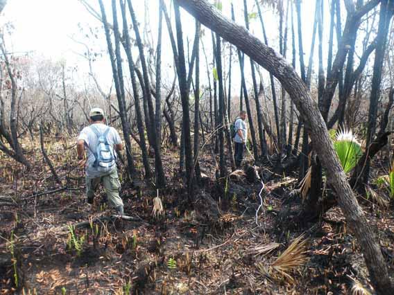 SATIIM rangers visit burned bog after the oil fire in Sarstoon Temash National Park. Photo by: Robin Oisín Llewellyn.