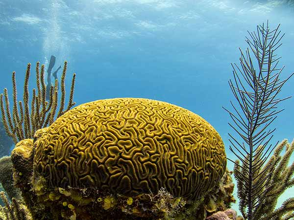 Belize Coral Reef