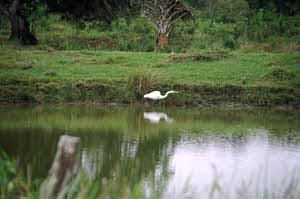 crane in pond