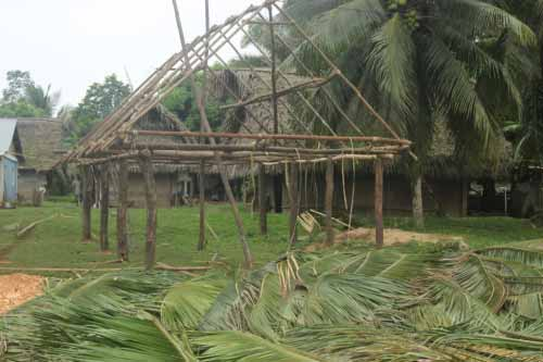 cohune palm leaves