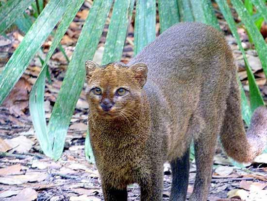 Big Cats Central Florida