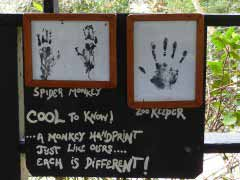 Monkey sign at zoo