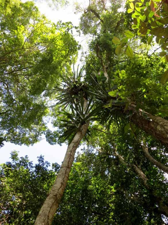 OrchidsCanopy (768x1024)