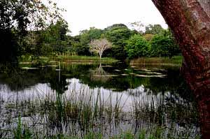pond with tree