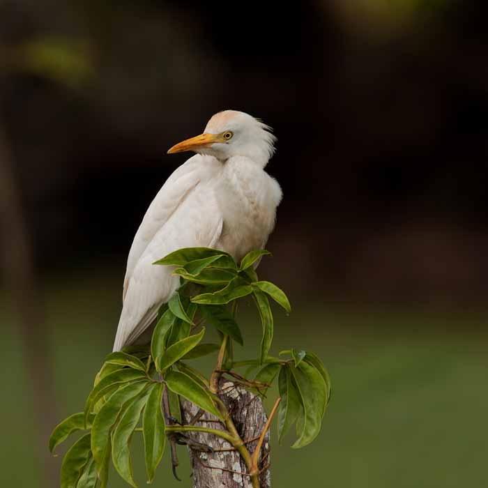 Birding at Crooked Tree Wildlife Sanctuary