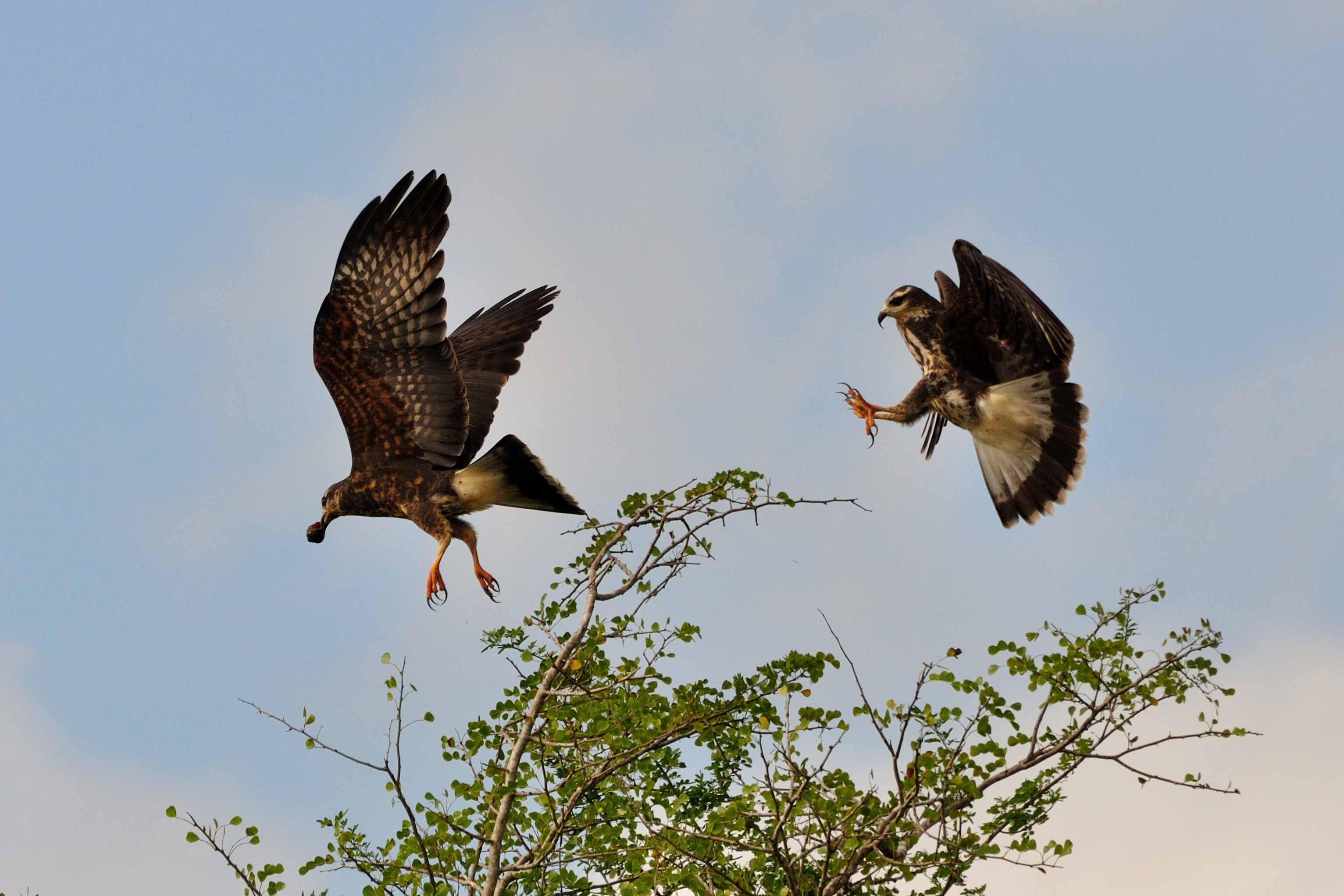 Caribbean Animals: Photographs Of Belizean Wildlife, Belize Animals