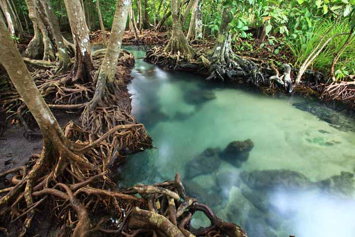 2014-11-06-mangroveforest_60275434.jpg