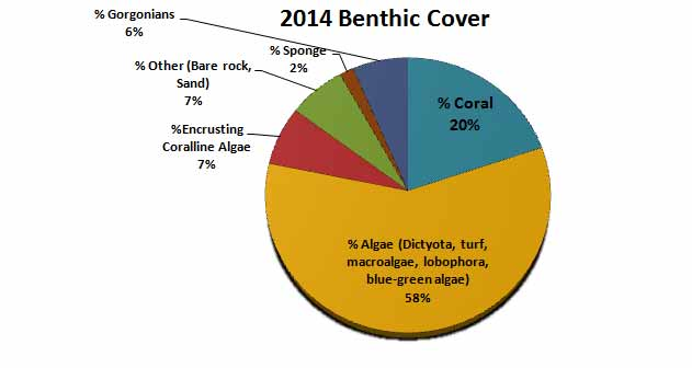 2014 Benthic Cover on Fore Reef Site at the Hol Chan Marine Reserve