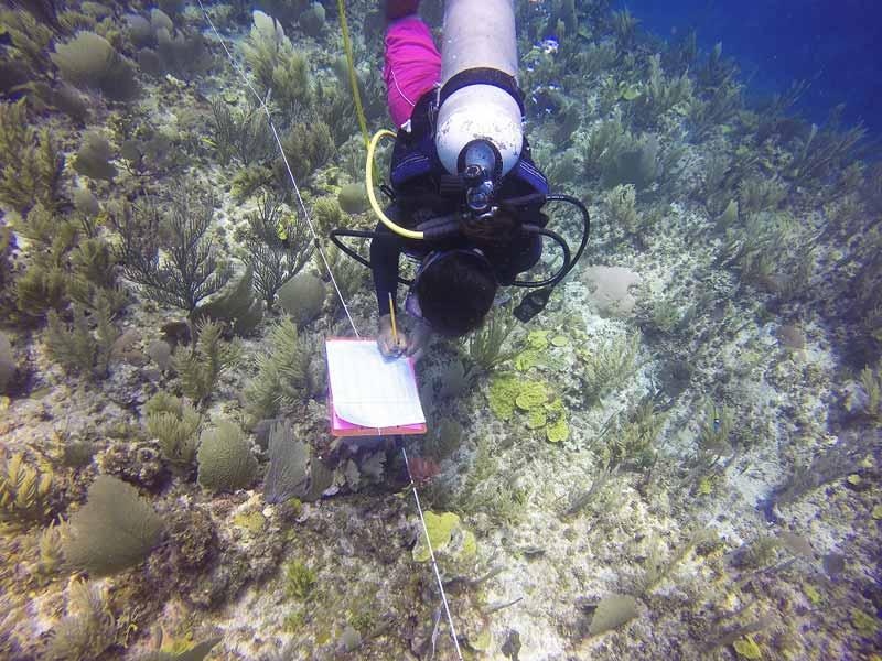 Biologist Conducting Reef Surveys