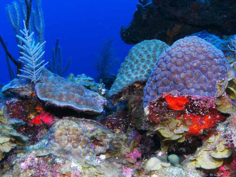 Corals at 70 Feet Depth