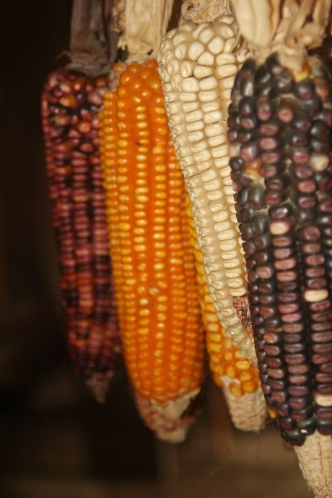 Four kinds of corn