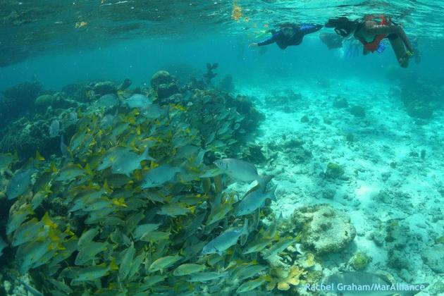 Marine Life Encounters in Belize