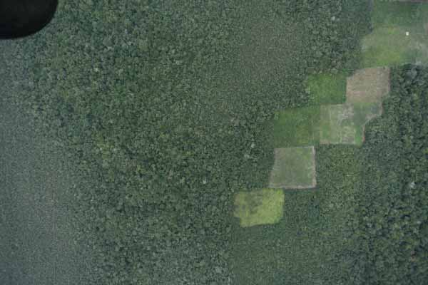 Agricultural plots within Belize's protected areas near the Guatemalan border. Photo ©WCS.