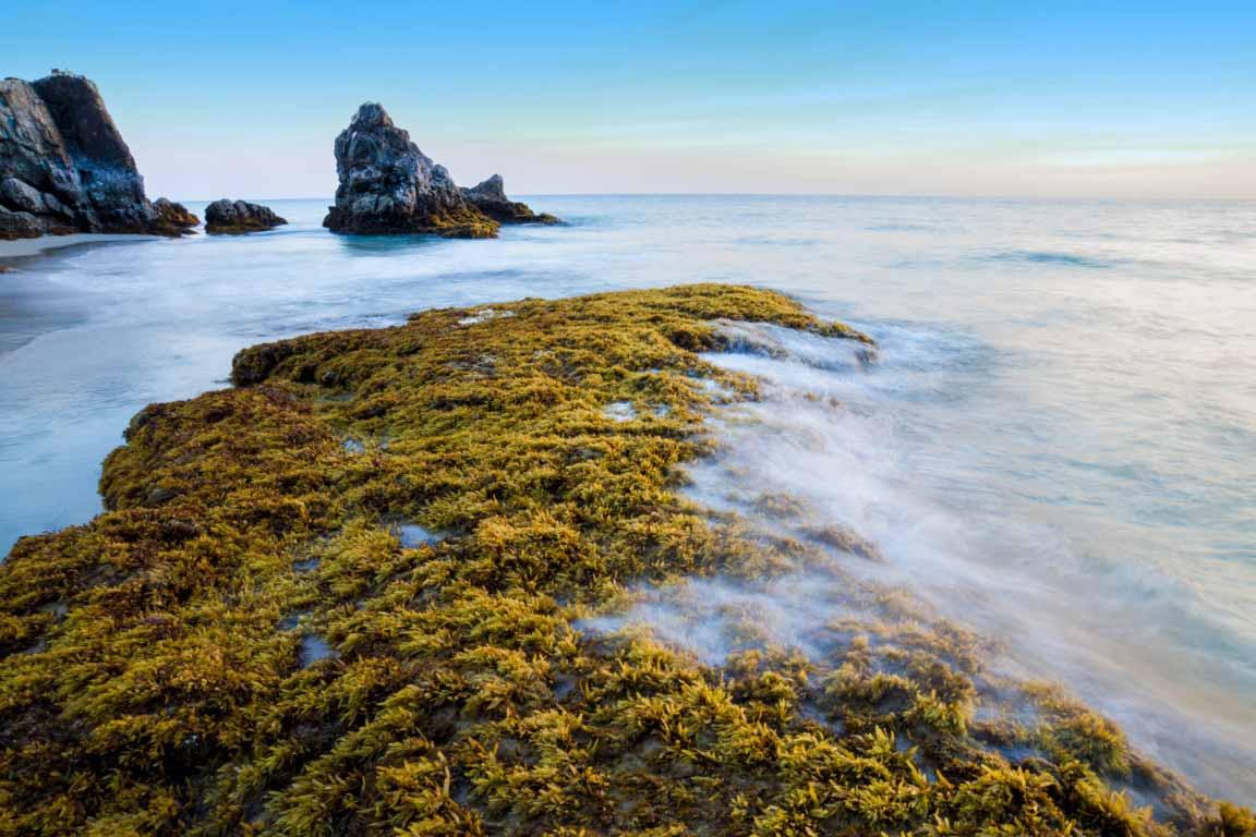 beach seaweed above water