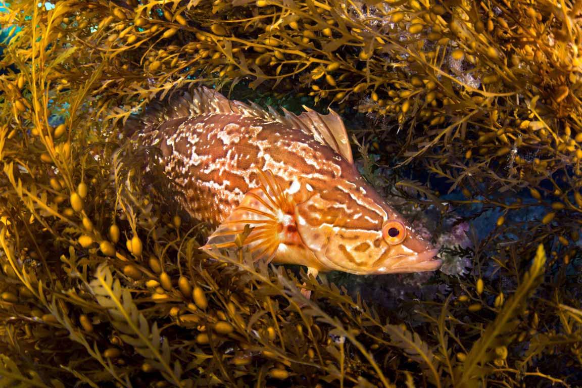 seaweed shelter