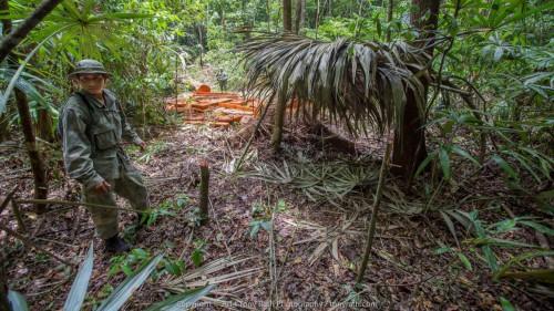 illegal-logging-2
