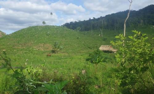 Illegal milpa farming