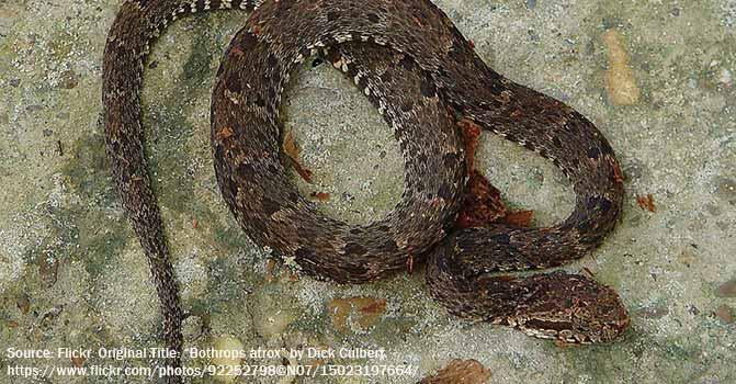 snake 4 narices